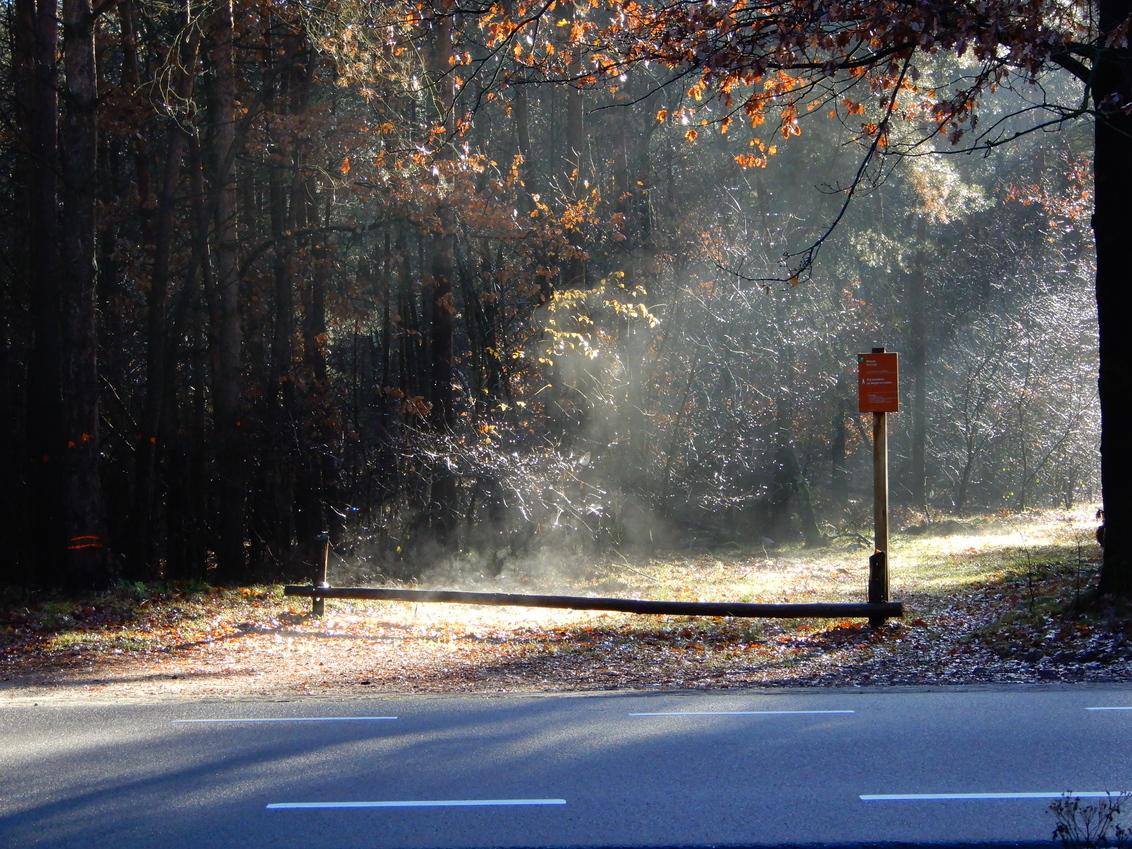 bospad Kootwijk 4 december 2018 - deze foto maakte ik vandaag 2 jaar geleden bij Kootwijk tijdens een boswandeling. zoals je ziet is er veel nevel en damp vanaf de grond. dank voor e - foto door Tonny1946 op 04-12-2020 - deze foto bevat: boom, herfst, blad, bos, nevel, paaltje, kootwijk, asfalt, december 2018, witte strepen