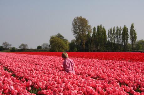 roze en nog eens roze