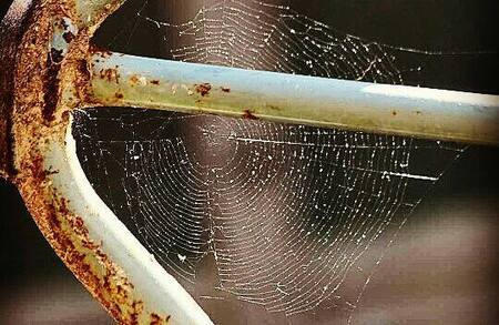Early Morning Dew - Zag dit mooie spinnenweb met dauwdruppels vanmorgen tijdens mijn ochtendwandeling, kon het dan ook niet laten om er een foto van te maken. - foto door Carla34 op 07-09-2016 - deze foto bevat: macro, natuur, druppel, ochtend, zomer, spinnenweb, nederland, dauwdruppels