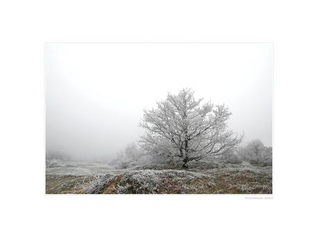 A Hazy Winter Wonderland - VII