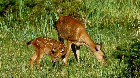 Bambi met z'n moeder