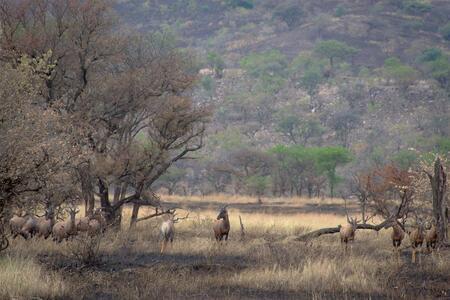 Topies in Serengeti National Park - - - foto door wd1956 op 24-07-2019 - deze foto bevat: tanzania, serengeti, topie