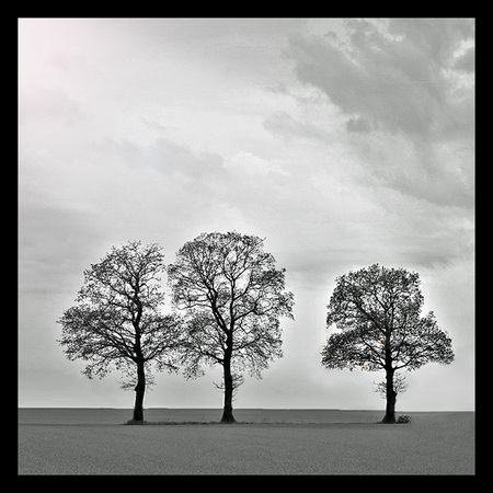 Three - ... - foto door hillegonda op 01-05-2012 - deze foto bevat: boom, landschap, bomen, drie, rij, zwart wit