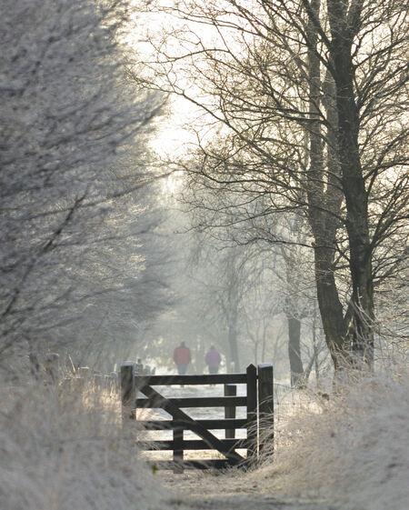 November 2010 - Bargerveen - foto door zorbus op 28-11-2010 - deze foto bevat: natuur