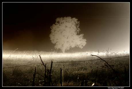 Andere boom in mist