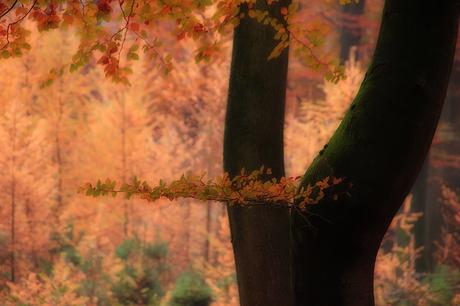 Autumn-leaves.
