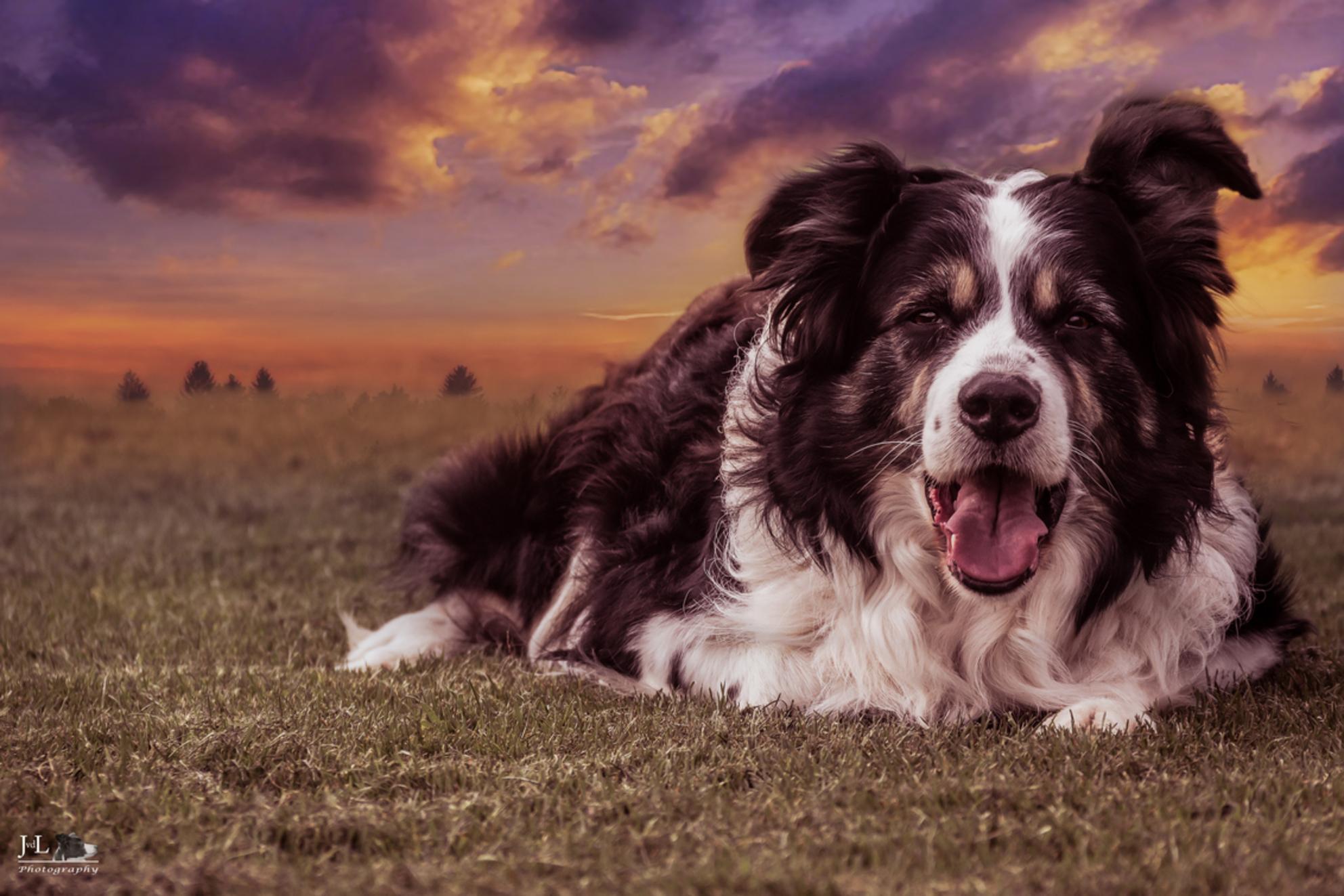 Joep - - - foto door jaime2205 op 18-01-2016 - deze foto bevat: dieren, huisdier, hond, Border Collie - Deze foto mag gebruikt worden in een Zoom.nl publicatie