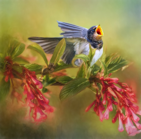 Zwaluw tussen de bloemetjes