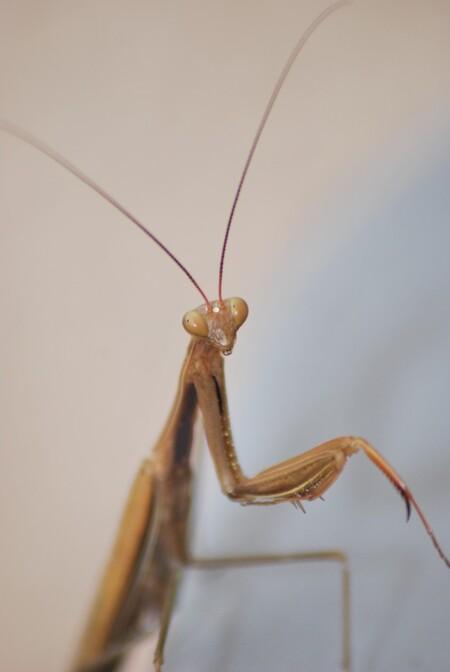 grasshopper - deze sprinkhaan kwam ik tegen op vakantie. - foto door swoutie op 24-01-2011 - deze foto bevat: insecten