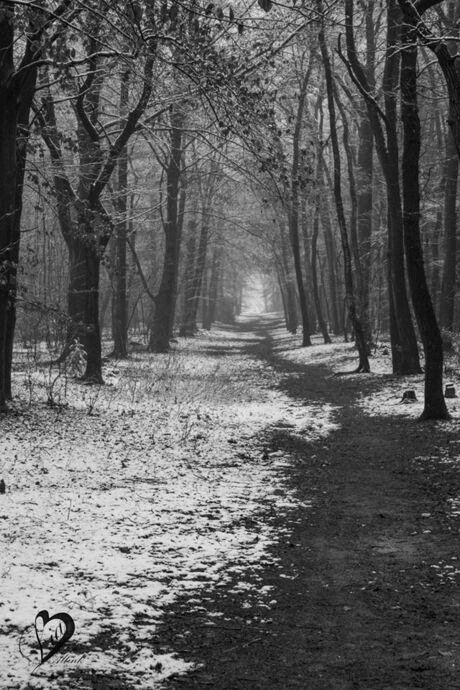 Winter wonder bos