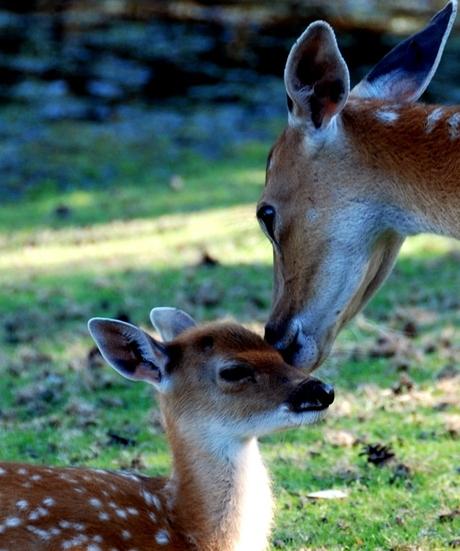 Ouder-liefde