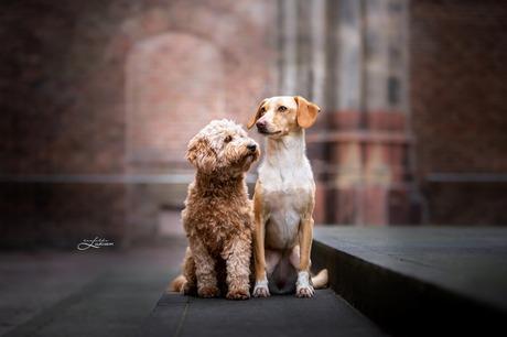 Daisy en Ruby in het oude stadscenteum
