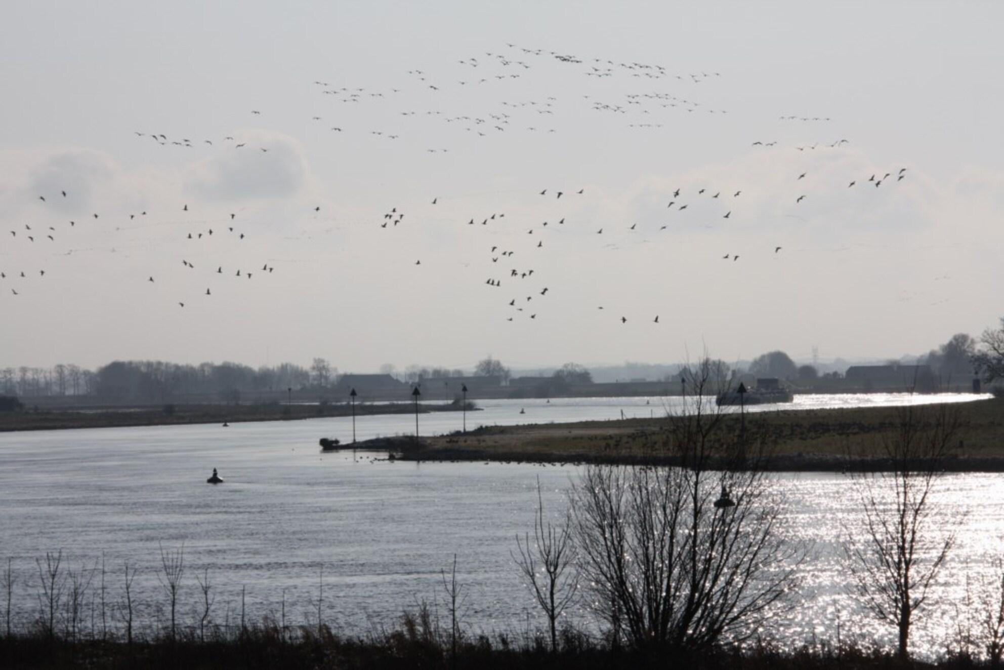 IJssel, slingerend door het landschap - IJssel, fourageerplaats voor watervogels - foto door eerbeekh op 19-10-2013 - deze foto bevat: dijk, ijssel, ganzen, rivier