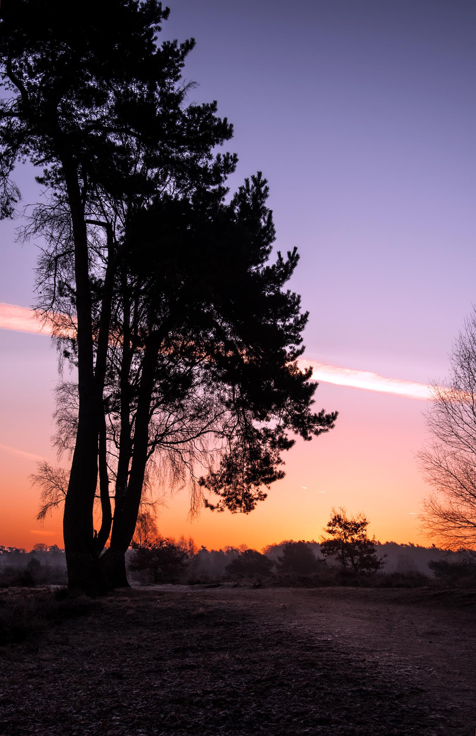 Sunrise - Favoriete moment van de dag - foto door SerenaZoom op 16-04-2021 - locatie: 6891 Rozendaal, Nederland - deze foto bevat: natuur, zonsopkomst, sunrise, veluwe, landschap, kleuren, ochtend, goudenuurtje, nikon, roze, natuurfotografie, lucht, nederland, lucht, atmosfeer, wolk, ecoregio, nagloeien, boom, natuurlijk landschap, afdeling, schemer, zonlicht