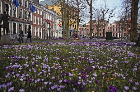 Ze zijn er weer...... - de krokussen op het Lange Voorhout. Speciaal voor Eef die ooit in Den Haag woonde/werkte ;-) - foto door Dodsi op 24-02-2014 - deze foto bevat: paars, blauw, bloem, lente, krokus, voorjaar, bloembol