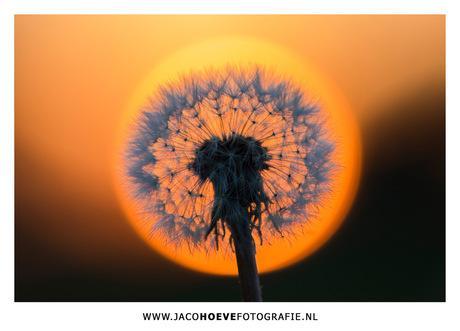 4W2A0103-JacoHoeveFotografie