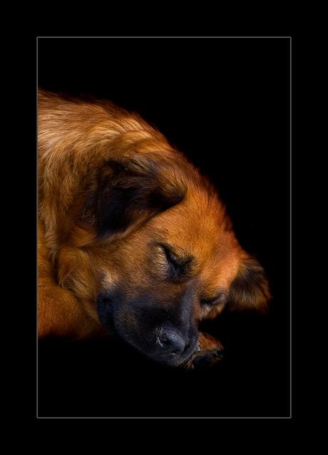 Sleeping beauty.............