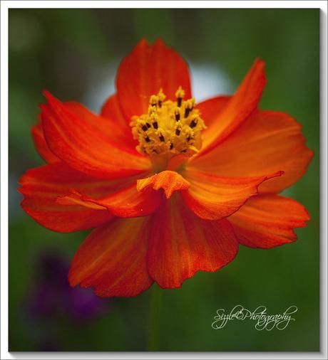 Een bloemetje voor jullie.