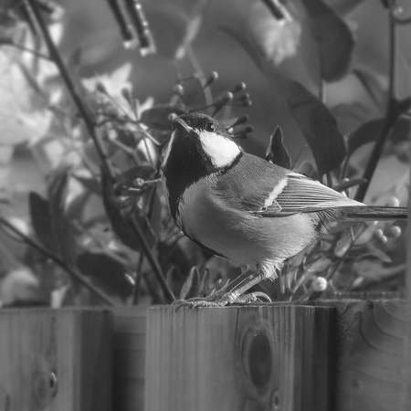 Koolmees - - - foto door Schumacher op 27-10-2020 - deze foto bevat: vogel