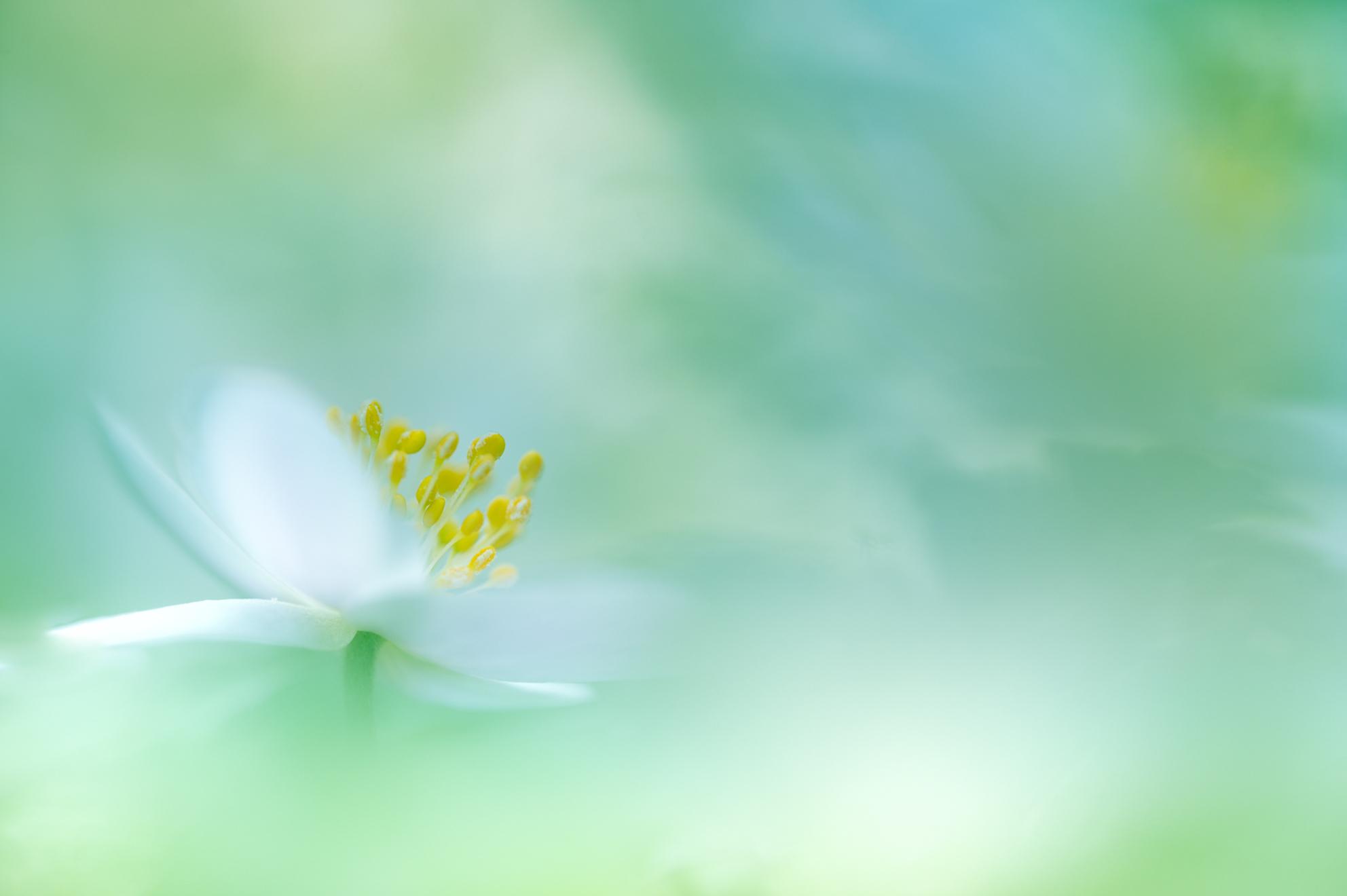 Een beetje kleur - Het is de laatste dagen niet echt zo heel mooi weer geweest, haha, Daarom voor jullie deze redelijk kleurrijke foto als goedmakertje voor de afgelope - foto door marielledevalk op 07-04-2021 - deze foto bevat: bloem, macro, soft, bosanemoon, dof, voorjaar, lente, achtergrond, groen, bloem, fabriek, bloemblaadje, natuurlijk landschap, kruidachtige plant, bloeiende plant, pedicel, terrestrische plant, gras, detailopname