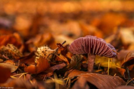 Herfst in Drenthe