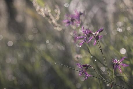 Bloemen in de zon