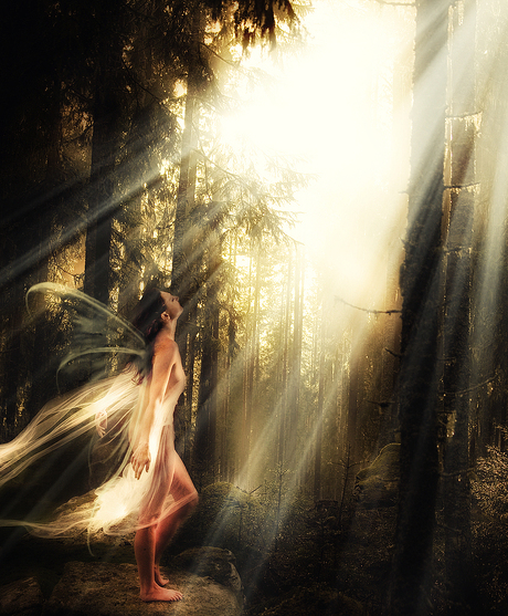 The Lost Mystical Fairy