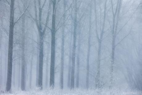 White Blizzard