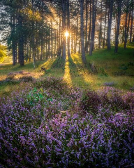 Bos en Heide