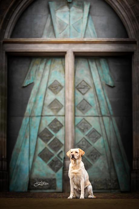 Penny bij de blauwe deur
