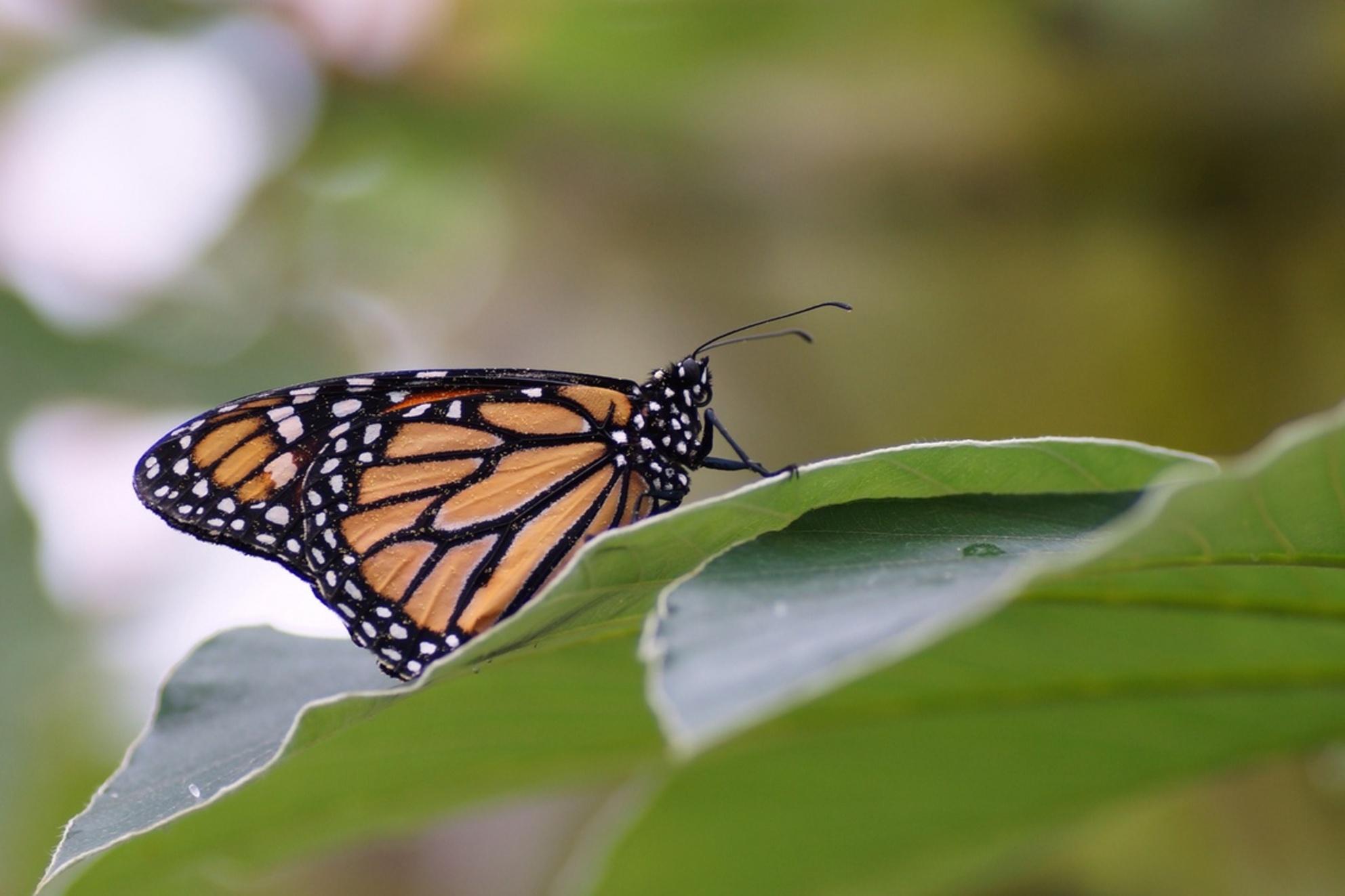Vlinder - Ondanks het grijze weer is het in de vlindertuin in Blijdorp altijd genieten.  Bedankt voor de reacties op mijn vorige foto - foto door Bijke172 op 28-01-2014 - deze foto bevat: vlinder, blijdorp, vlindertuin - Deze foto mag gebruikt worden in een Zoom.nl publicatie