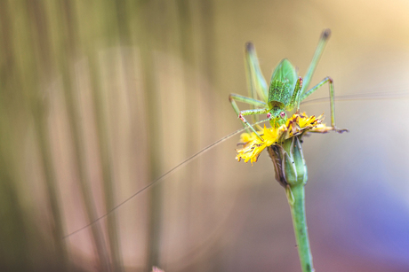 Flower hopper