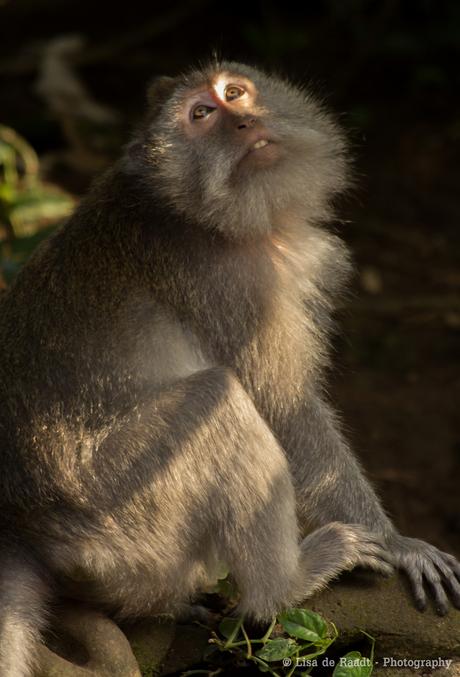 Sunny monkey