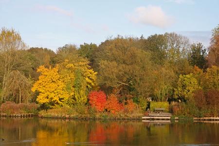 Nog even genieten van de kleuren - De laatste bladeren zullen er binnenkort wel af waaien. - foto door petervanmeurs op 10-11-2010 - deze foto bevat: kleur, herfst, bomen, petervanmeurs