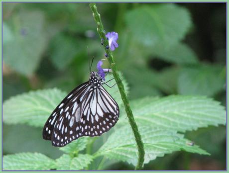 Mijn laatste vlinder...