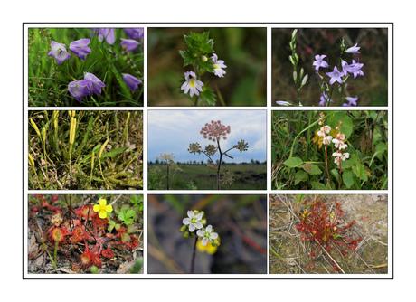 Wilde bloemen in Fochterloerveen