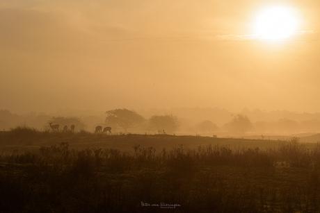 duinlandschap bij zonsopkomst
