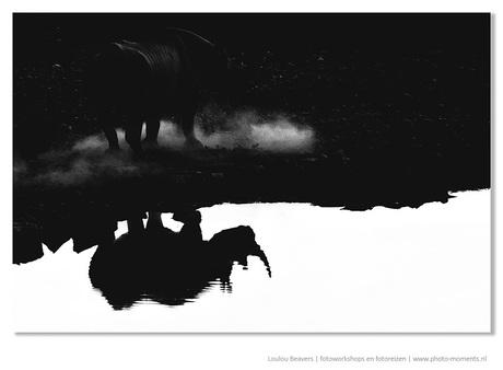 Black and white rhine