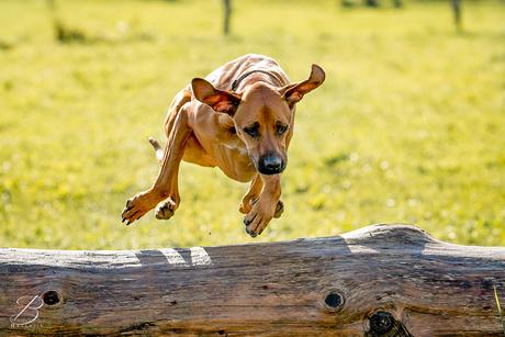 Jumpin' Jack Flash...