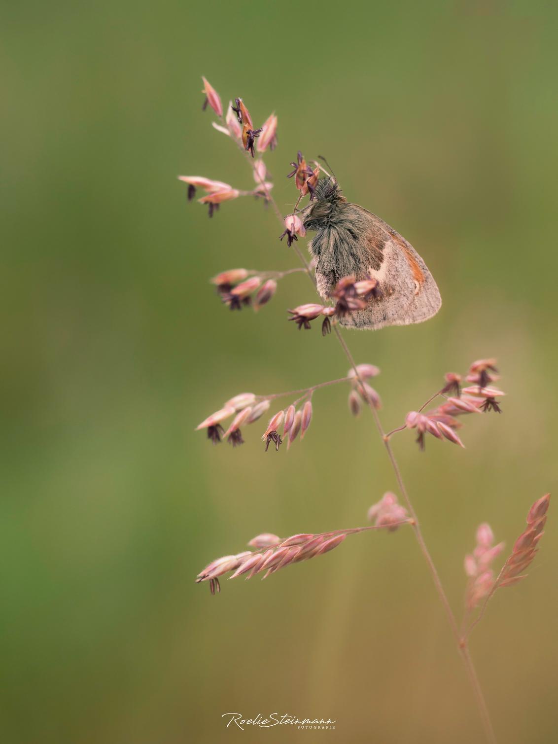 Longing for summer - Zo af en toe kom ik nog wat leuks tegen in mijn mappen van het afgelopen jaar. Ik hoop dat het komend jaar net zo'n mooi vlinder jaar gaat worden.  - foto door steinmann.rp op 08-01-2018 - deze foto bevat: groen, macro, wit, zon, bloem, lente, natuur, vlinder, geel, licht, oranje, zomer, insect, dof, bokeh