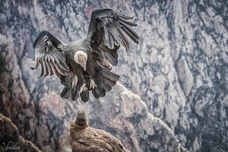 The Condor is landing - Cruz de Condor-2