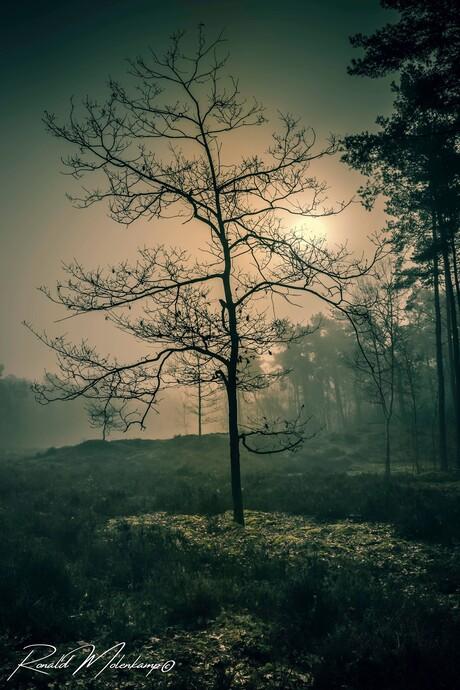 RM PhotographyIMG_3721