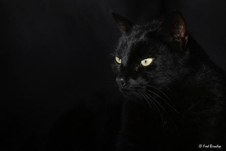 de kat van mijn dochter