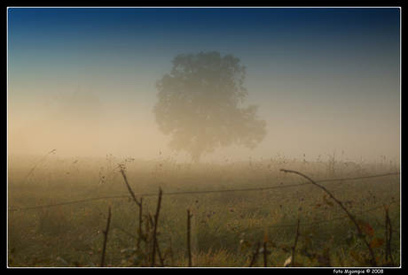 Boom in mist nr. 2