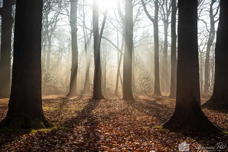 De Bijeenkomst - De bomen lijken net een cirkel te vormen om het groepje bomen in het midden. Een soort mythische ceremonie waarbij de zon aanbeden wordt. - foto door Sake-van-Pelt op 04-03-2021 - deze foto bevat: groen, lucht, wolken, zon, boom, bladeren, water, natuur, druppel, geel, licht, ochtend, winter, blad, landschap, mist, bos, tegenlicht, zonsopkomst, nederland, zonnestralen, beukenbos, horsten, jacobsladder, zonneharp, ceremonie, beuken, bijeenkomst, aanbidden