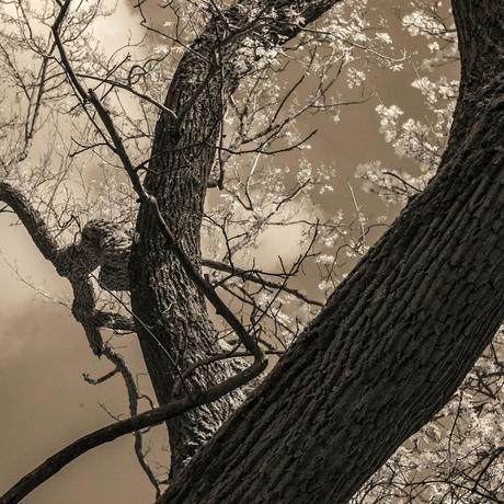 Bomen 2.jpg