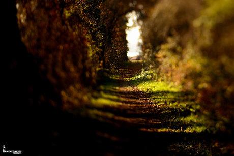 anneke davidsfotografie landschap macro fotografie met natuurlijk dachtlicht gefotografeerd in Apeldoorn Beekbergerwoud 201811180995