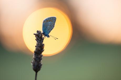Caught in the rising sun