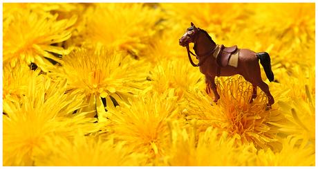 paardenbloemen