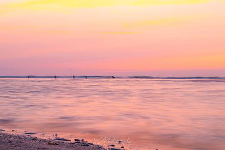 Roze strand